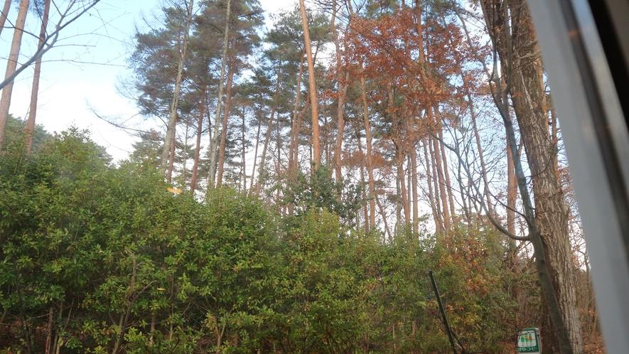 *[和洋室からの眺め]木立に囲まれて落ち着いて過ごせます