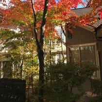 *【紅葉】当館の名前の由来にもなったケヤキの紅葉。青空に良く映えます。