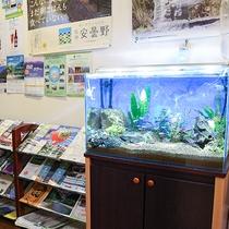 *[玄関]綺麗な熱帯魚も一緒に皆様をお出迎え♪