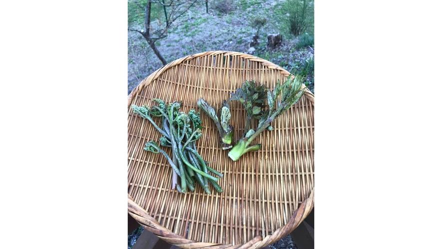 *初物山菜/山菜が収穫できる穏やかな時期になりました♪