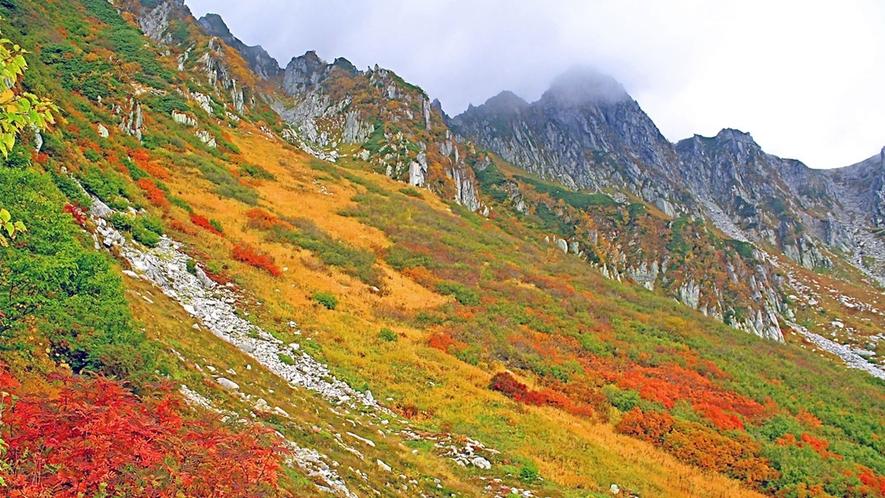 *≪千畳敷≫ダケカンバ、ナナカマドなどロープウェイから見渡す紅葉はとてもおすすめです。