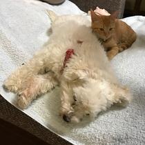 *【看板犬/看板猫】犬のさくらと猫のきなこ、とっても仲良しです。