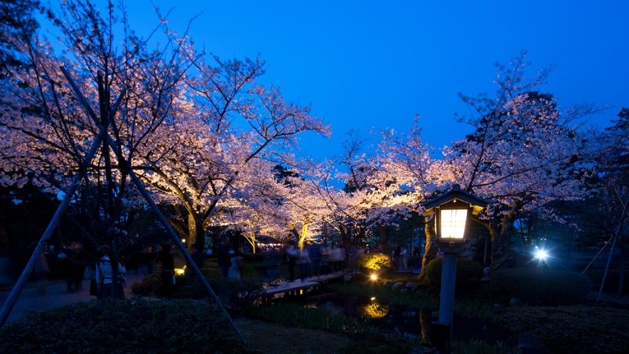 兼六園・桜 (ライトアップの様子)(写真提供:金沢市)