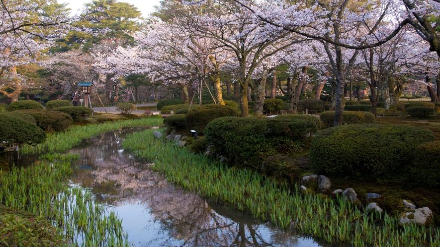 兼六園・桜 (写真提供:金沢市)