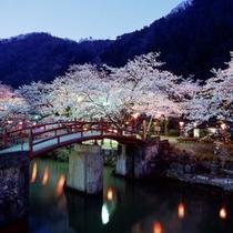 ■庄川峡桜まつり