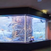 『魚津水族館』