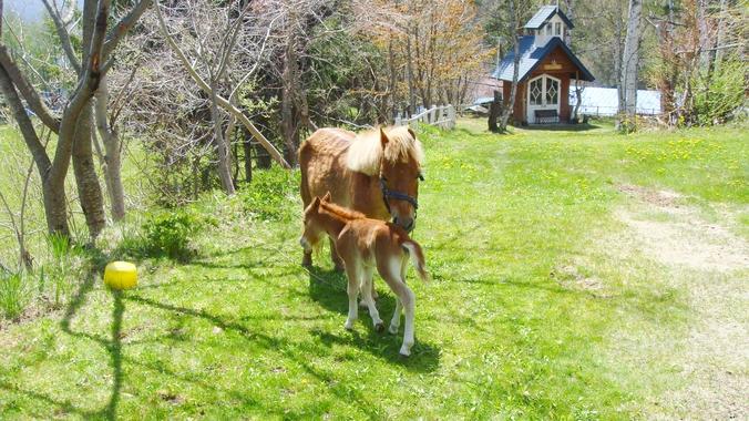 *ホテル敷地内のお庭/かわいい馬の親子もお散歩中♪