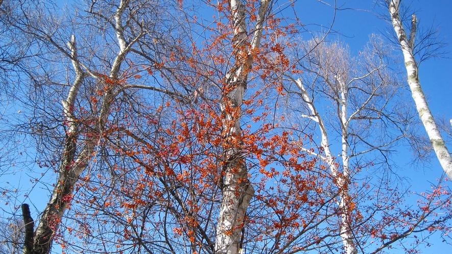 *ホテル敷地内のお庭/白樺の木々に囲まれた秋の風景