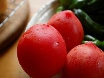 シオンの畑で採れたばかりのトマト