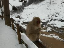 静かに思考しているお猿さん、、、、。