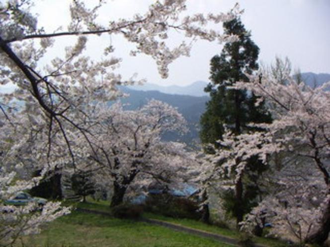平和観音、湯田中温泉のサクラの名所。