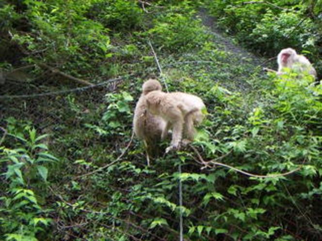 山の中腹にも、お猿さん、、、。