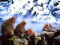 monkey   park ,  admission  fee, \800