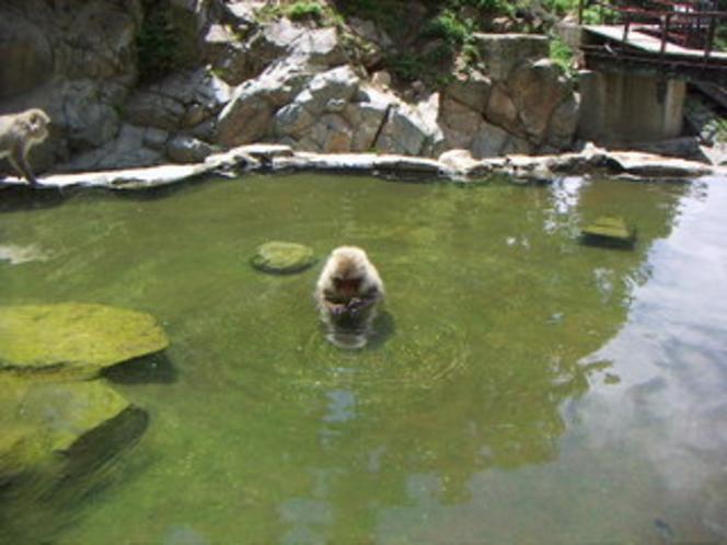 monkey  park   お猿さん貸し切り風呂 ?