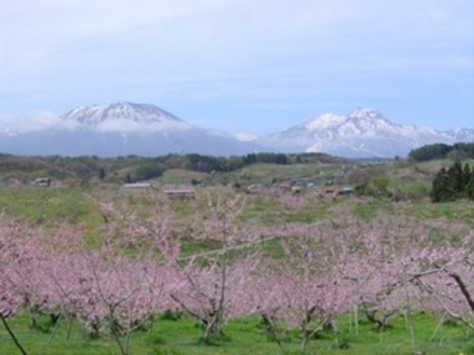 飯綱山と桃の花畑。