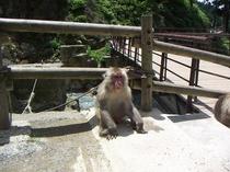 お猿さん、見つめられています、、、。