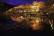 須坂市、臥竜公園。日本桜100選に登録されています。