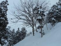 木の枝に、お猿さんがまるまっています、、、