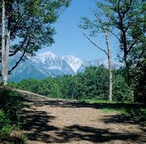 森の小道より白馬三山