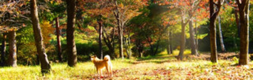 鹿の湯温泉散歩コースにて 10月中頃