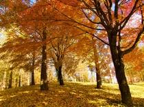 銀杏の森は富士見高原ペンション村と鹿の湯温泉の分岐点です。