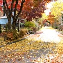【景観】秋になると色鮮やかなモミジやイチョウの木に目を奪われます。