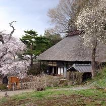【周辺】春になると観音堂の周りに桜が咲きます。