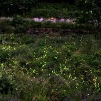【周辺】毎年6月になると多くの蛍がやってきます。