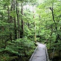 ○観光 御泉水自然園森の中