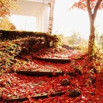 ○外観秋2 落ち葉の小路