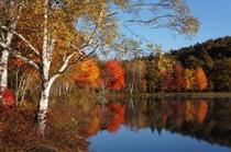 女神湖湖畔の秋