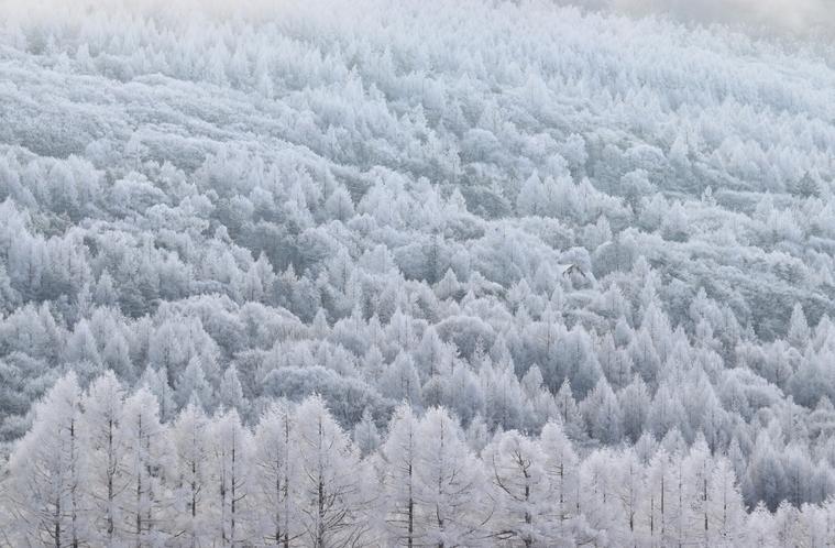 蓼科第二牧場から見た霧氷の森