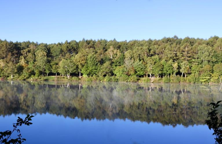 初秋 女神湖 湖畔の木々