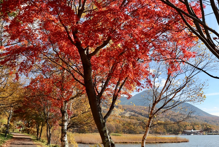 秋の女神湖湖畔