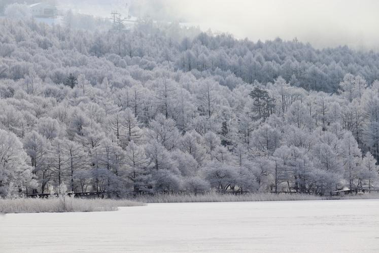 女神湖湖畔の樹氷