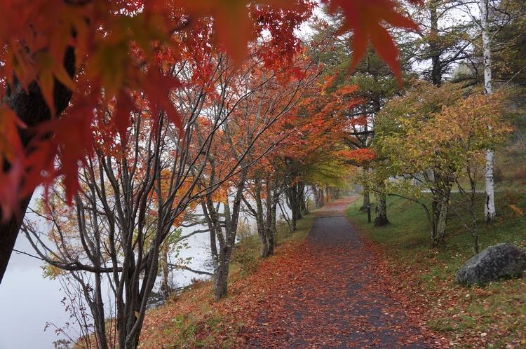秋 女神湖湖畔
