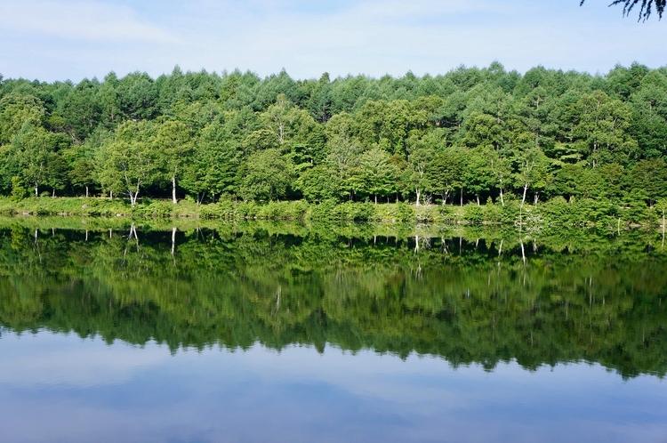 女神湖湖畔の木々 夏