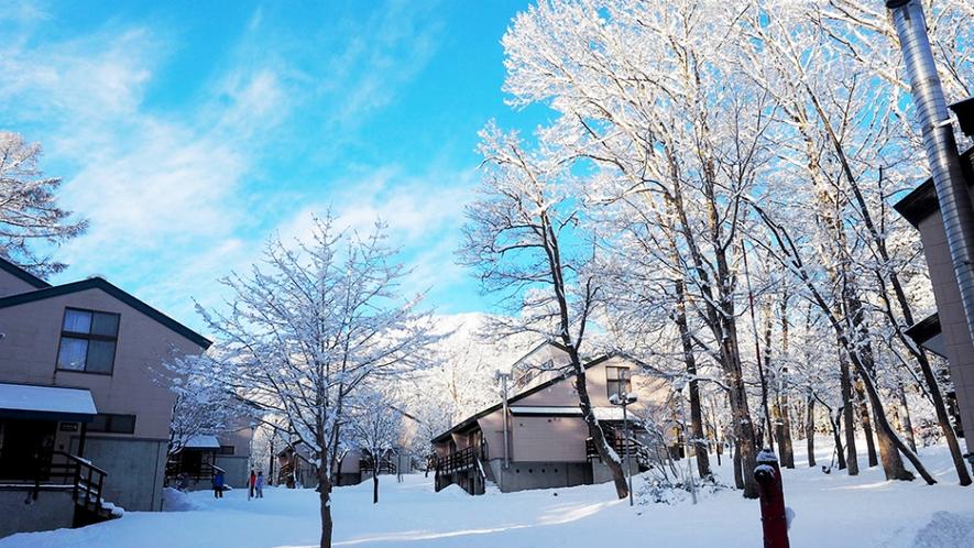 真冬のラボランド
