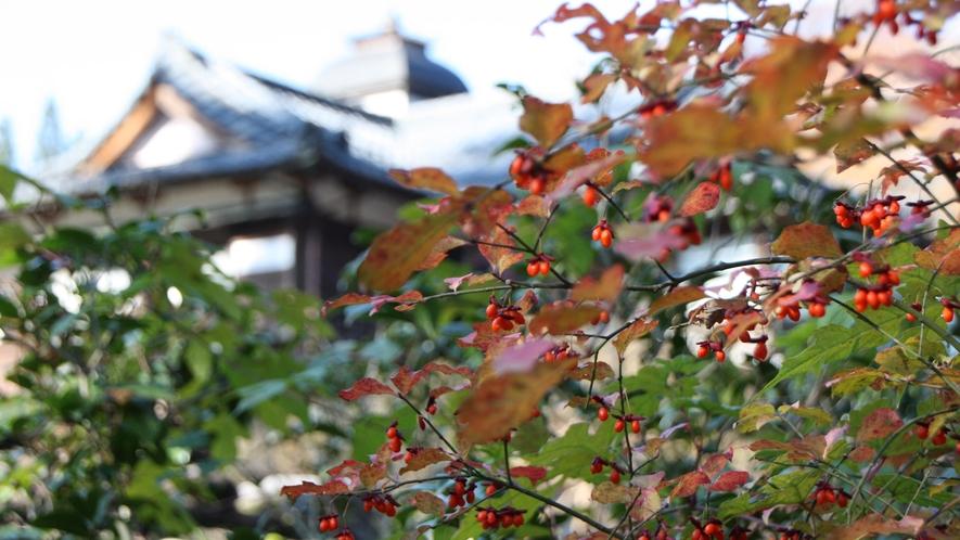 【秋】野庭園の秋の装い