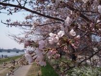 新潟市の風景〜春〜