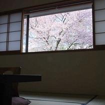 【桜】満開の時期、一部のお部屋からご覧いただけます。