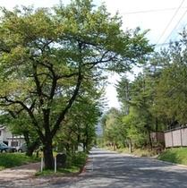 緑あふれる大町温泉郷内をそぞろ歩きしませんか?!