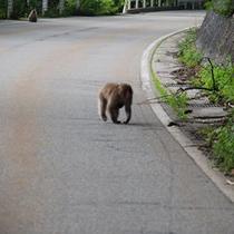 道中、山のお客さまと出会うことも