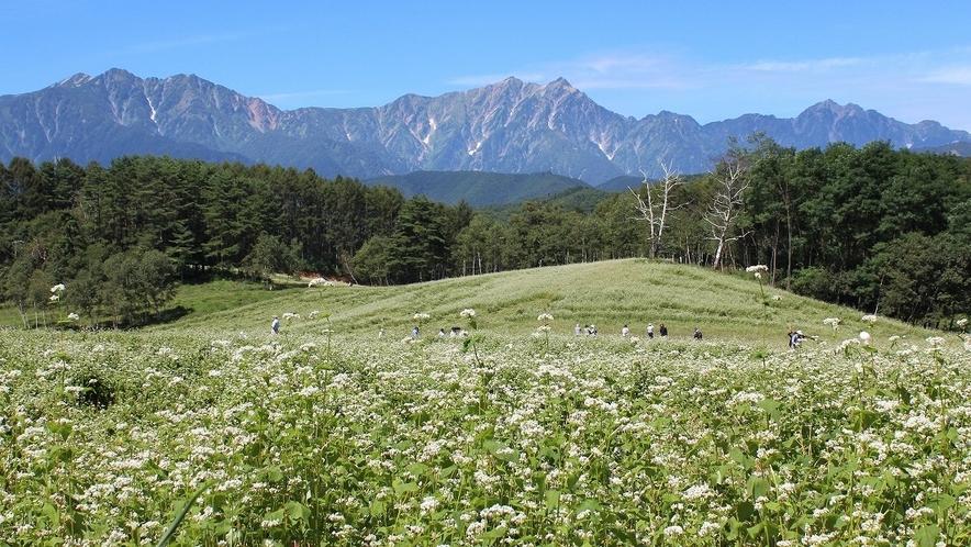 【中山高原】そば畑