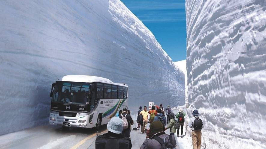 【アルペンルートプラン】雪の大谷