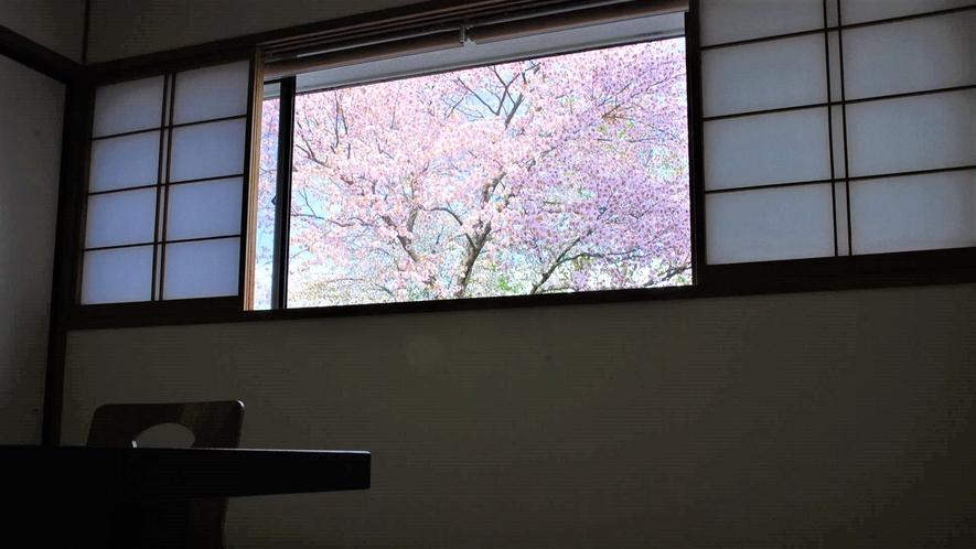 客室からの景観  春