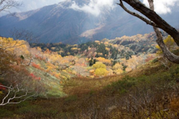 秋の栂池自然園