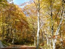 秋の松川上流