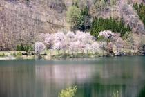 春の中綱湖