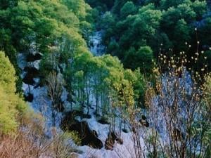 ブナ林と残雪